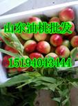山东油桃价格价格,山东油桃价格介绍,山东油桃价格行情图片