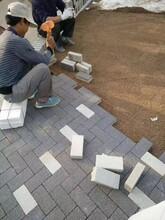 上海透水磚,青浦陶瓷透水磚與自然共生圖片