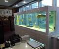 东莞海鲜池定做东莞超白鱼缸定做东莞亚克力鱼缸定做