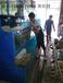 湛江定做市场海鲜鱼池制造海鲜鱼池首选昌辉海鲜池公司设计海鲜鱼池