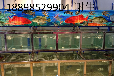 梅州定做海鲜池_定做海鲜池价格_优质定做海鲜池批发/采购