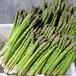 进口芦笋种子优质芦笋种子济南芦笋种子