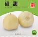 香瓜种子尚甜