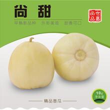 香瓜种子尚甜图片