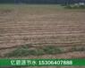 聊城优质胡萝卜专用滴灌带批发厂家