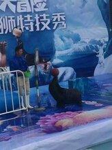 安徽商場活動海獅表演商場開業慶典海獅演出活動策劃