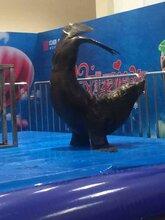 安徽海獅演出表演周年慶典活動池州主題大型演出