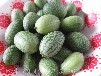 拇指西瓜種植經濟效益