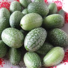 拇指西瓜种植经济效益图片