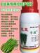 控制韭菜旺長防治干尖增產明顯的好農藥韭菜專控