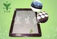正规厂家OEM贴牌生产玉石保健磁疗床垫锗石托玛琳床垫双温双控
