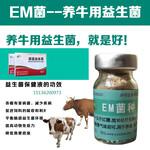 给小牛改善肠胃用的em菌种哪里有卖?