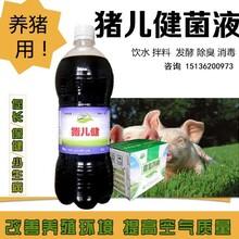 给猪饲喂益生菌真的会减少生病吗?