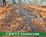 郴州山地柑橘小管出流滴灌技术