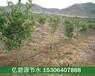宜昌山地果树水肥一体化微喷技术