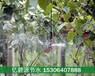朝阳水肥一体化喷灌系统设计安装