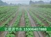 安阳大田蔬菜喷灌技术示范方案