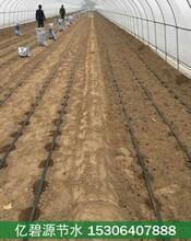 运城蔬菜大棚滴灌系统规划设计方案