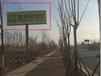 东营钢材大市场单立柱