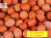 增加蛋壳厚度专用产品饲料厂专用