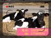 奶牛飼料添加劑調節腸道降低體細胞