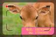 母牛饲料添加剂厂家供应防止牛拉稀饲料添加剂
