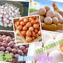 改善蛋壳颜色的原料壳红素选什么牌子图片