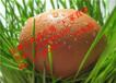 饲料厂专用蛋鸡饲料添加剂加深蛋壳颜色不褪色
