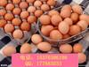 治疗蛋壳质量差改善蛋壳品质产品招代理