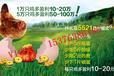 改善蛋壳颜色效果稳定不掉色的蛋禽饲料添加剂
