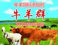 牛羊益生菌调理牛羊肠道治疗不反刍腹胀图片