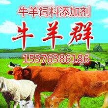 牛羊益生菌调理牛羊肠道治疗不反刍腹胀