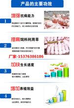 猪用益生菌说明和猪用益生菌图片图片