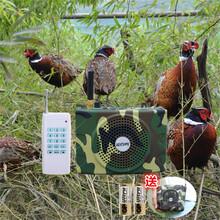 金百鸣B93鸟煤扩音器诱鸟机无线超远遥控斑鸠竹鸡电媒播放器图片