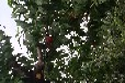 3公分桃树苗今年哪里便宜?3公分桃树苗今年哪里有卖?