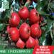 山东林泽苗木优质山楂苗山楂种植技术基地种植量大优惠