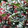 山东林泽苗木优质花椒苗花椒种植技术基地种植量大优惠图片