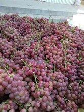 陕西葡萄价格,优质葡萄批发,今年红提葡萄市场行情价格图片