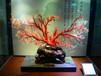 红珊瑚值多少钱一克