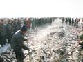 四川成都查干湖鱼销售成都查干湖哪里有卖图片