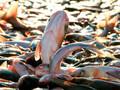 贵州贵阳查干湖鱼销售贵阳有卖查干湖鱼的图片