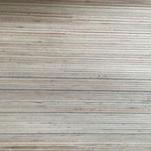 全桉木三聚氰胺贴面基板图片