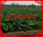 汤阴雪莲藕种植防渗膜6米0.4mm国标黑色一件300平米厂家批发