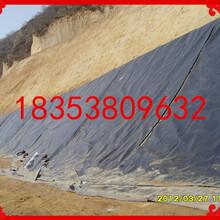 岑溪市hdpe土工膜国标黑色光面幅宽6米厚度1.25mm一件300平米厂家直销