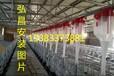 云南设计安装猪场自动上料设备专业首选弘昌