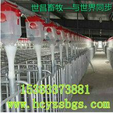 自动料线养猪设备100头猪免费设计规划