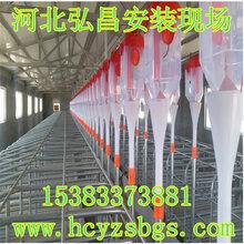 猪自动料线弘昌专业厂家规划设计