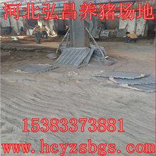 铸铁漏粪板母猪产床漏粪板专业厂家批发出售