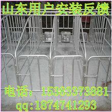 定位栏猪设备沧州泊头市世昌畜牧专卖厂家直销质量放心