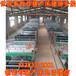 保育床小豬斷奶設備圍欄專業廠家焊接低價批發出售